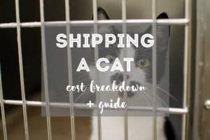 How Much Does It Cost to Ship a Cat and The Cheapest Way to Ship a Cat   Fluffy Kitty - Cat Travel Guides & Eco Cat Care