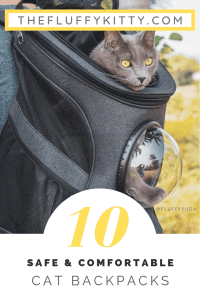 Top 10 Best Cat Backpack Carriers for Adventurous Felines WhoTravel | The Fluffy Kitty | thefluffykitty.com