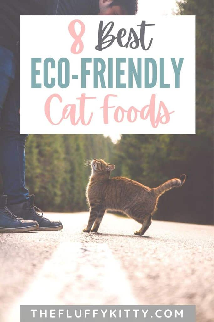 Eco-friendly Cat Food - The Fluffy Kitty