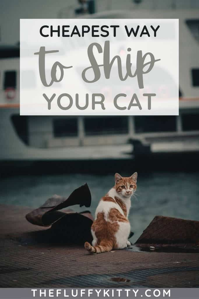 cheapest way to ship a cat pin 1