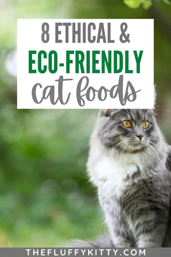 Ethical & Eco-Friendly Cat Food - The Fluffy Kitty