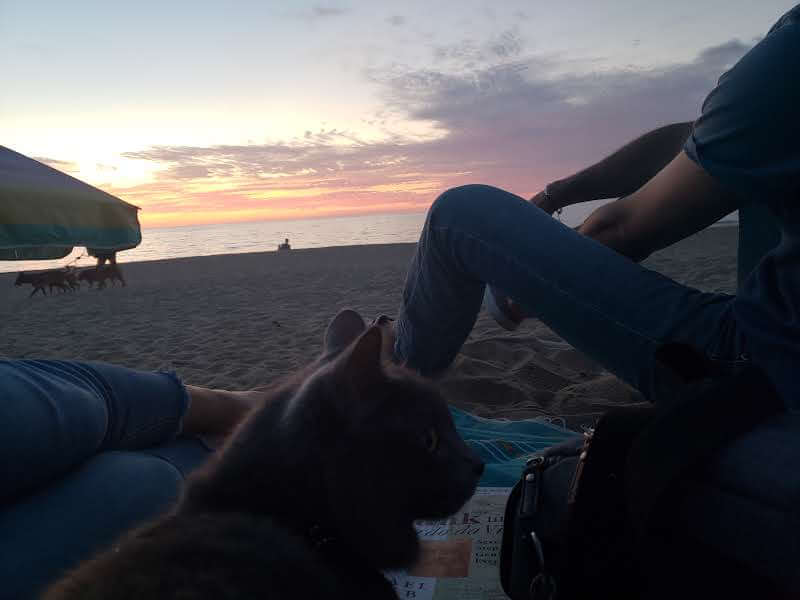 21 Tips for Taking Your Cat to the Beach | Fluffy Kitty Blog thefluffykitty.com