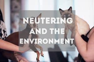 6 Ways Neutering Your Cat Helps the Environment | Fluffy Kitty thefluffykitty.com
