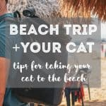 10 Tips How to Calm My Cat Down for Travel