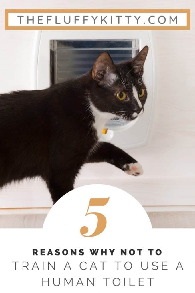 5 reasons why NOY to toilet train cats. #cats #bathroom #cat #cattips Fluffy Kitty Blog | www.thefluffykitty.com