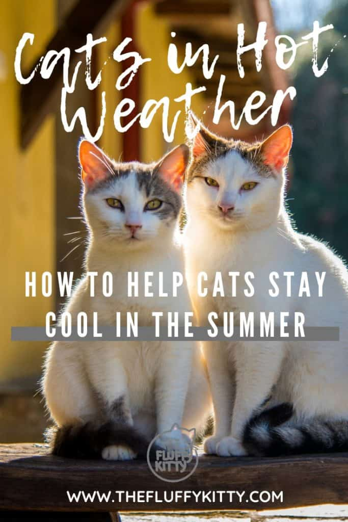 How to keep your cat feeling cool during the hot summer months - Guide by Fluffy Kitty www.thefluffykitty.com #cats #summer #cathealth #catcare