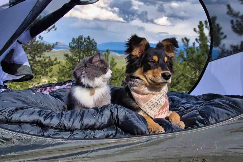 Rio & Bruce The Camping Duo | Cat Stories | The Fluffy Kitty Blog