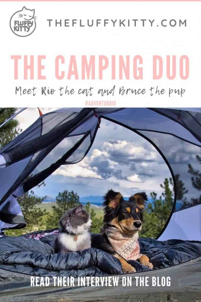 Read about Rio the cat and Bruce the dog - they both love camping together! See full interview on the blog: The Fluffy Kitty www.thefluffykitty.com