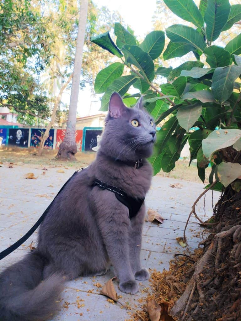 Our Journey Becoming Sustainable Cat Owners // Fluffy Kitty Blog thefluffykitty.com