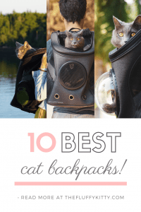 10 Best Cat Backpacks Ultimate Guide | THE FLUFFY KITTY | thefluffykitty.com