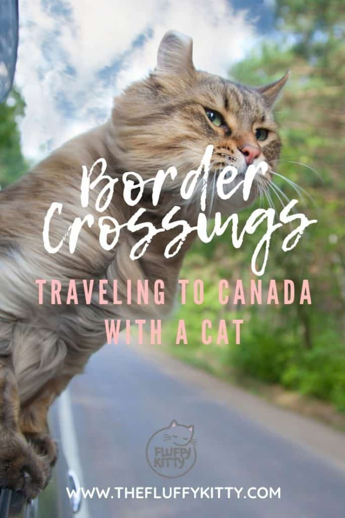 Crossing into Canada with a Cat in a Van | Our Guide THE FLUFFY KITTY www.thefluffykitty.com #borders #usacanada #cats #adventurecats