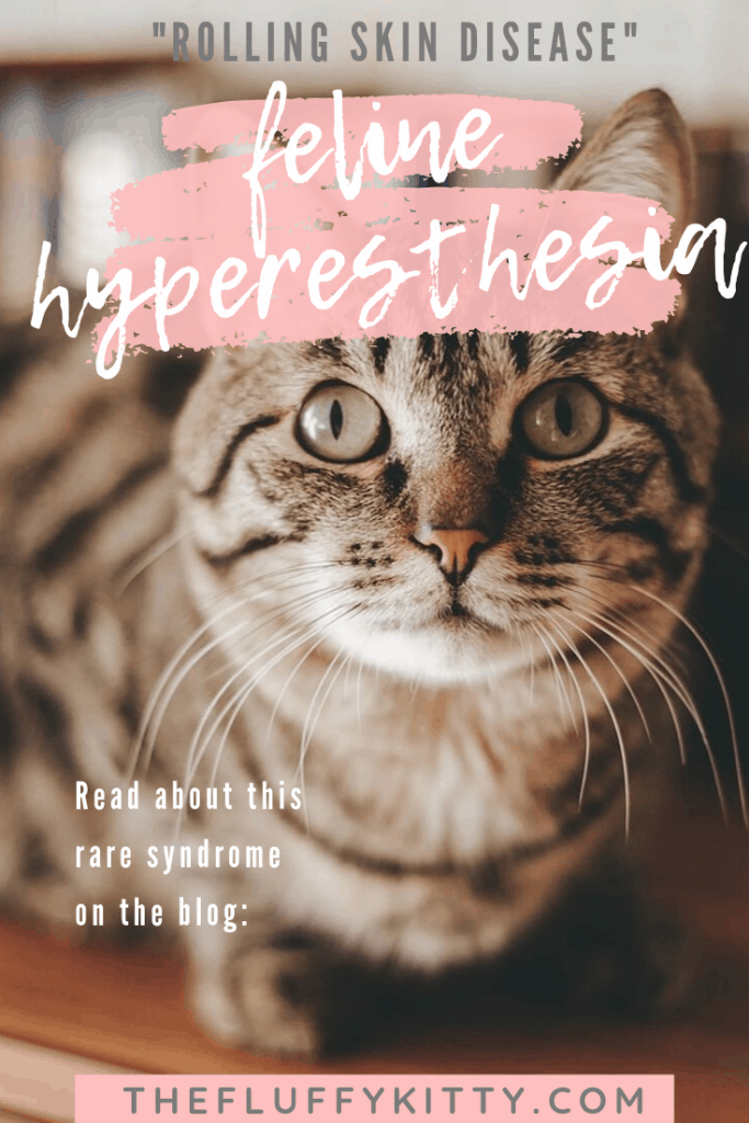 "What is Feline Hyperesthesia? Feline Hyperesthesia or Rolling Skin Disease in Cats is a mild - moderate condition in which your cat may frantically twitch or ""roll"" their skin. It could be due to a serious underlying cat health condition. Read more on the blog: The Fluffy Kitty thefluffykitty.com #cats #cathealth #catinfographic #cat"