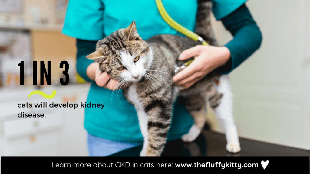 1 in 3 cats develop kidney disease. // www.thefluffykitty.com