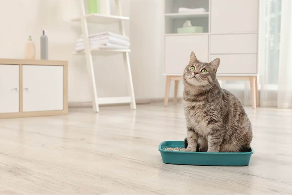 10 Best Eco-Friendly Cat Litters Compilation | The Fluffy Kitty www.thefluffykitty.com #ecofriendly #cat #catlitter #cats