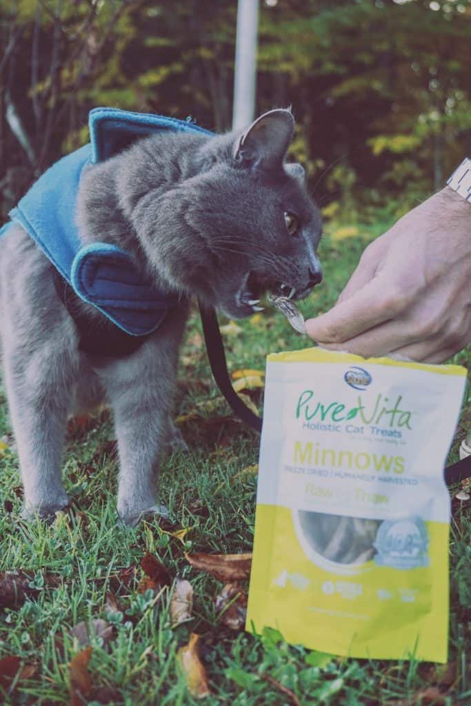 PureVita's Freeze-Dried Cat Treats | Review by Fluffy Kitty www.thefluffykitty.com #cattreats #fluffykitty