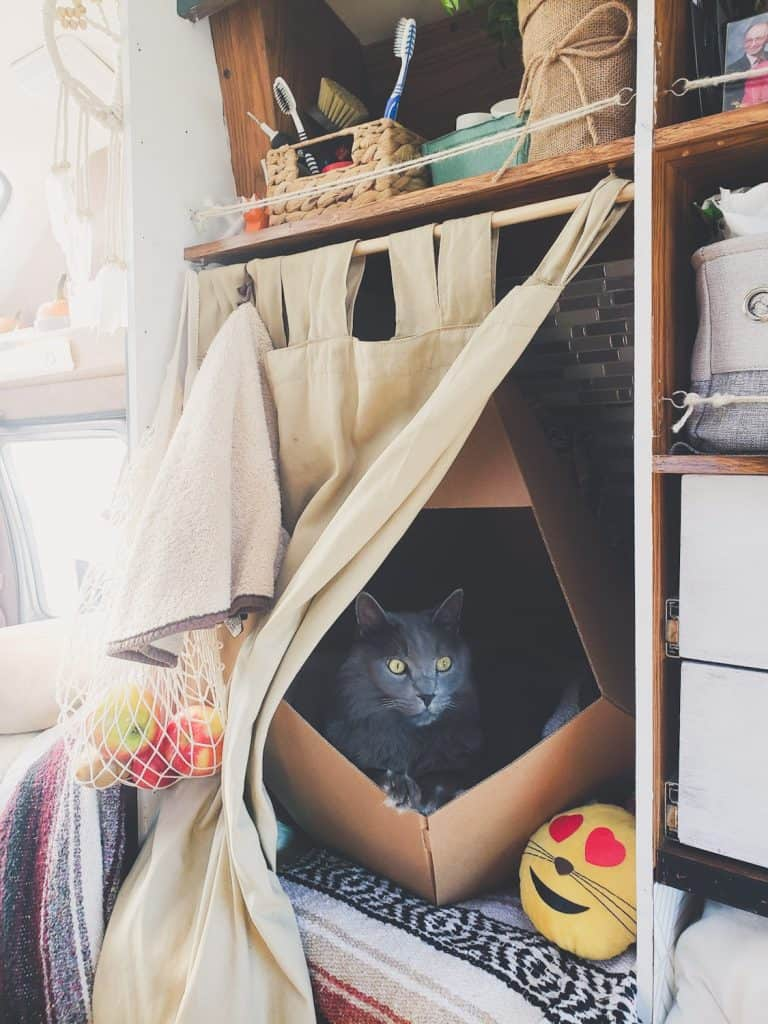 Van Life with Cats: Ultimate guide on how to manage living and traveling full-time with a cat in a camper van. www.thefluffykitty.com @fluffyyoda The Fluffy Kitty #vancat #vanlife #vancats #vanlifewithcats