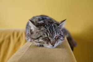 CKD in Cats // chronic kidney disease in felines