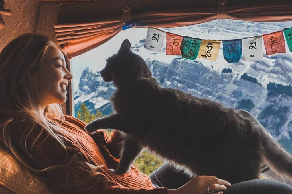Van Life with Cats: Ultimate guide on how to manage living and traveling full-time with a cat in a camper van. www.thefluffykitty.com @fluffyyoda The Fluffy Kitty #vancat #vanlife #vancatmeow #vanlifewithcats