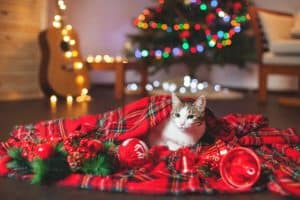 Eco-Friendly Gifts for Cats & Humans | The Fluffy Kitty Blog www.thefluffykitty.com #santapaws #christmas #giftguide #giftideas #cats