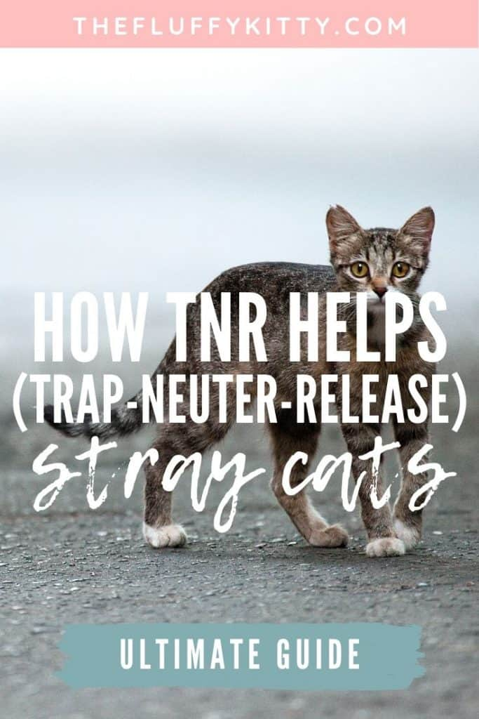 How Trap Neuter Release (TNR) Helps Out Stray Cats #cats #strays | Fluffy Kitty