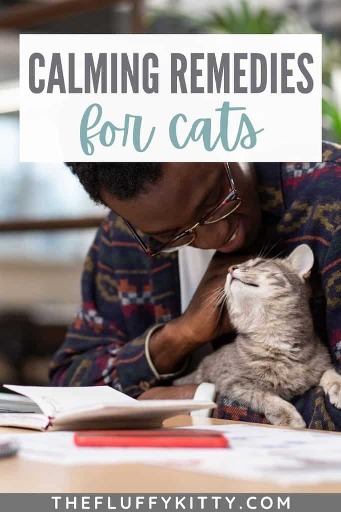 Best Natural Calming Remedies for Cats