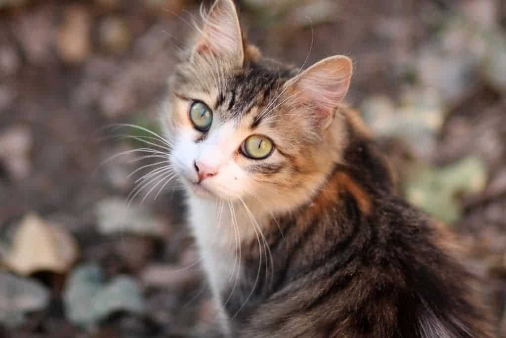 cat outdoors natural remedies for calming cats