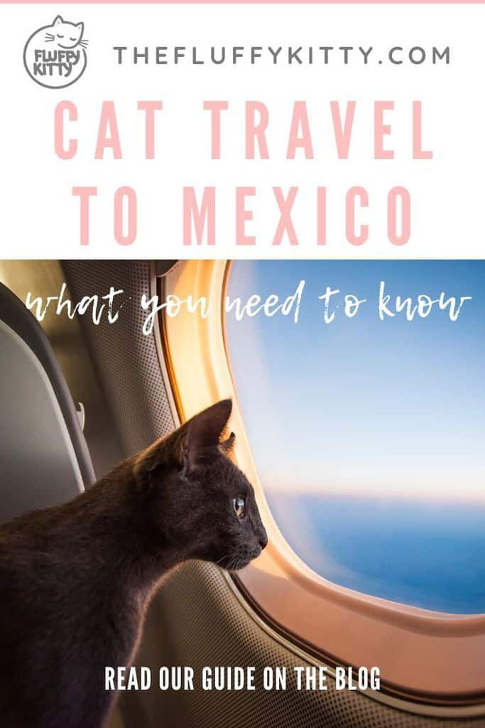 Flying to Mexico with a Cat | The Fluffy Kitty #petblog #cats #pettravel #pets #mexico