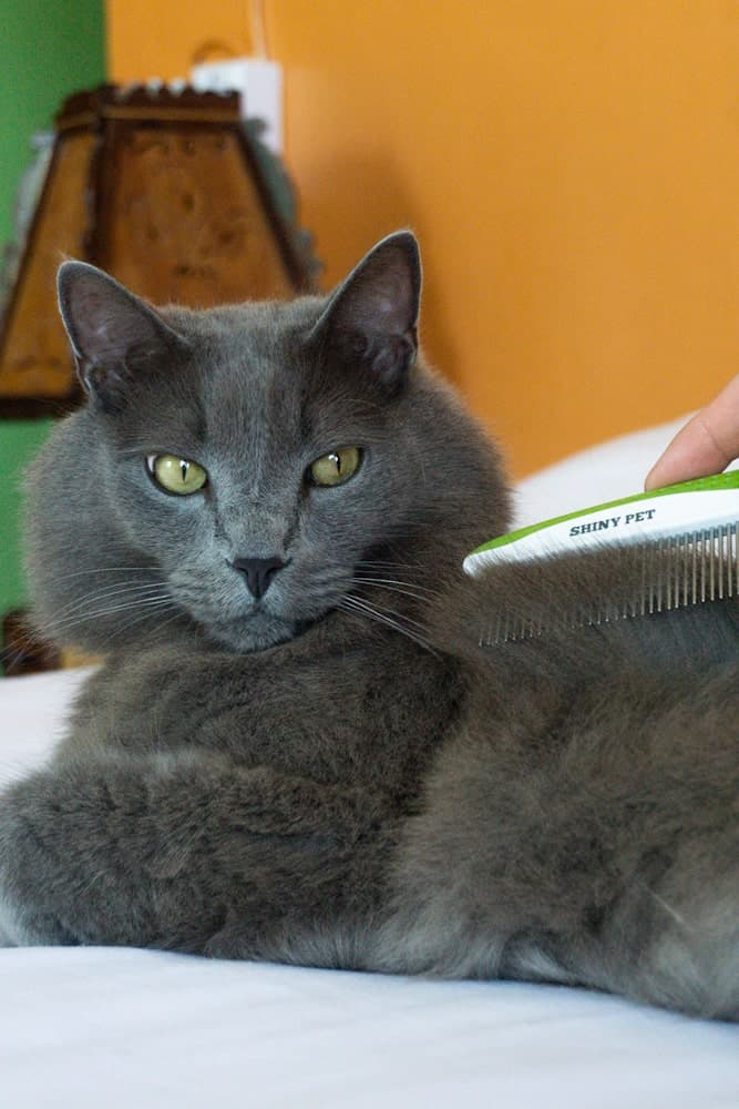 Best comb for cats featuring Shiny Pet comb | The Fluffy Kitty