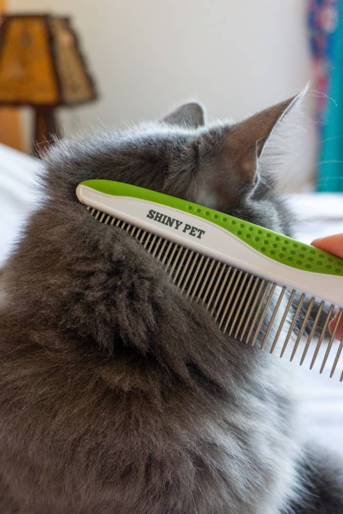 Best comb for cats featuring Shiny Pet comb   The Fluffy Kitty