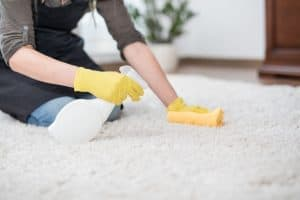 person cleaning cat urine stain on carpet
