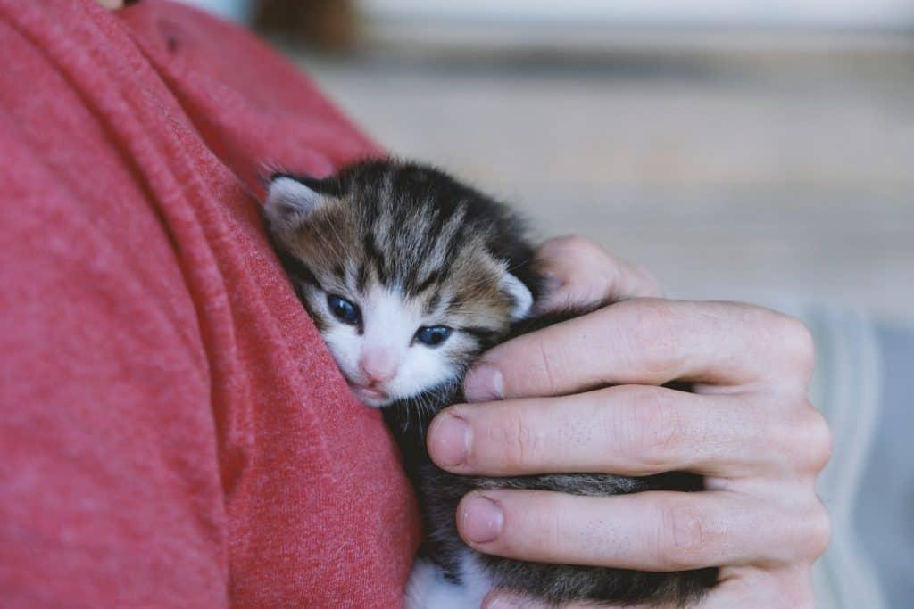 kitten foster | hand