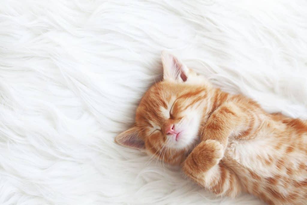 baby kitten | fostering kittens