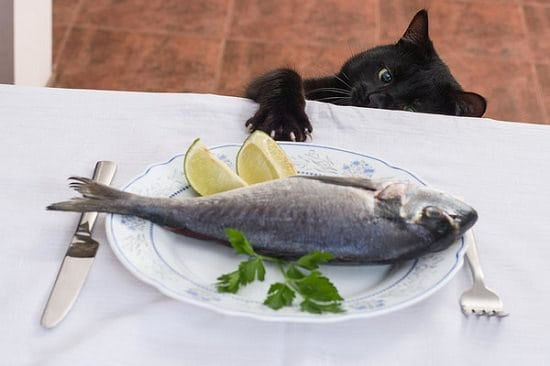 is fish good for cats | cat pawing at fish on plate