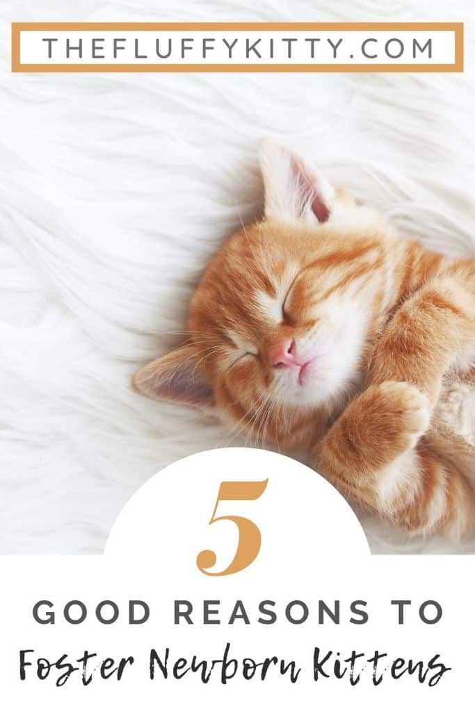 5 reasons to foster newborn kittens
