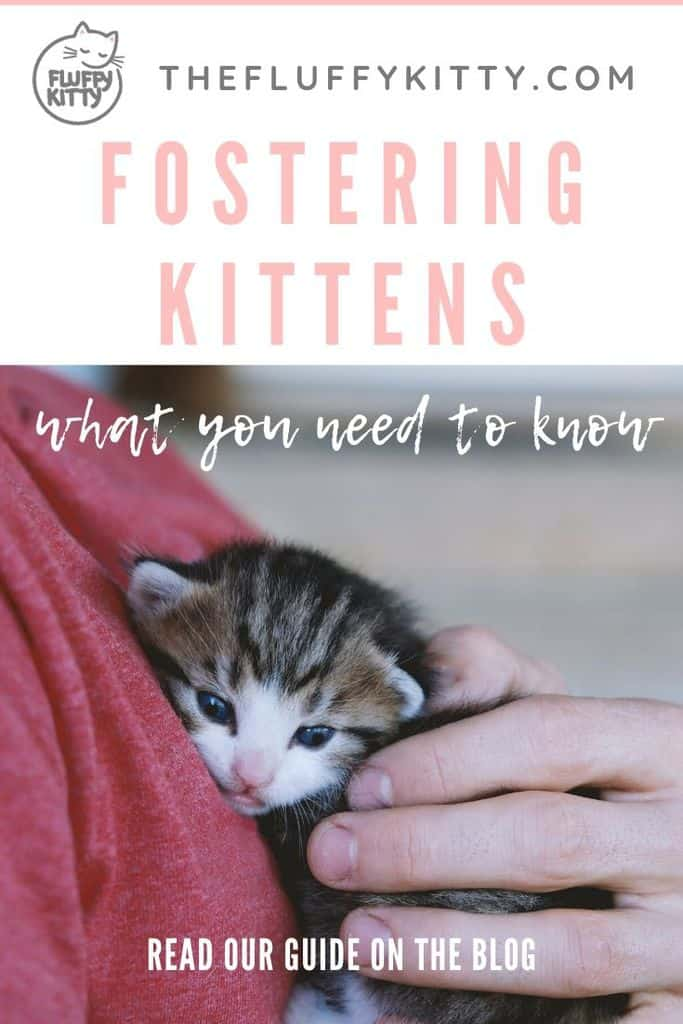 fostering kittens - what you need to know