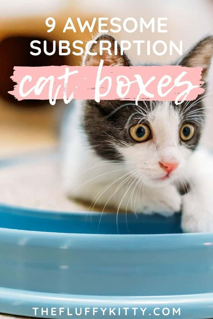 9x best cat subscription boxes | The Fluffy Kitty