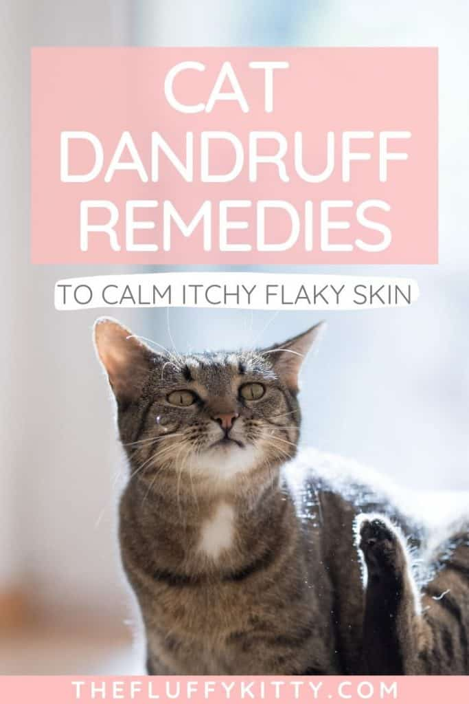 cat dandruff remedies to treat cat dandruff and soothe itchy cat skin | thefluffykitty.com