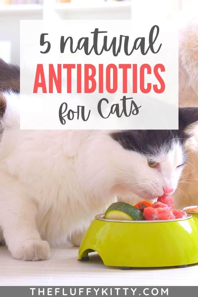 cat eating healthy food. Natural antibiotics for cats pinterest pin