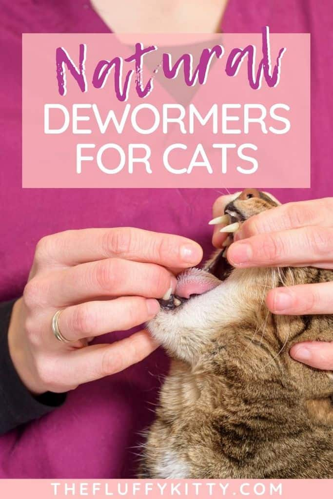 Natural deworming solutions for cats - are they effective? #cats #catcare #cathealth #deworming #catblog