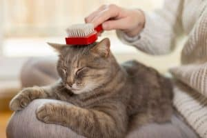 woman brushing cat - a natural hairball remedy for cats