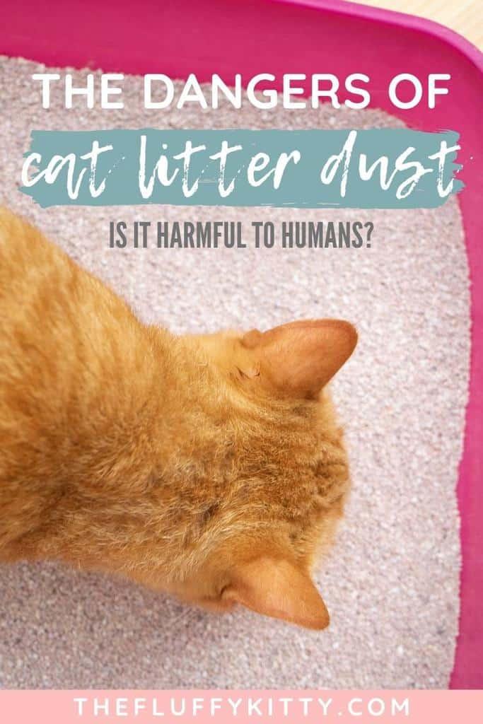 Breathing Cat Litter Dust - Is It Harmful?