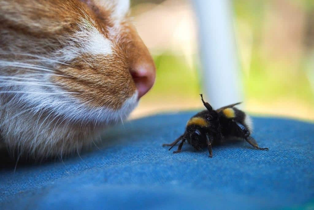 cat sniffing a bee | what bugs are poisonous to cats