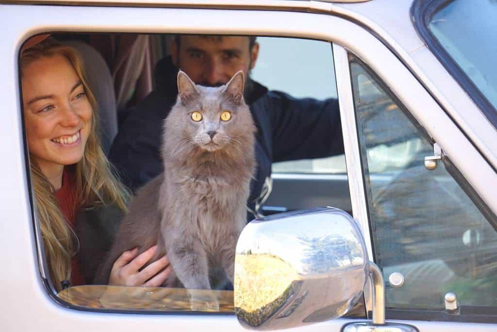 La guía definitiva para viajar en una autocaravana con gatos