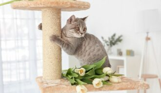 gray cat scratching on eco friendly cat tree post
