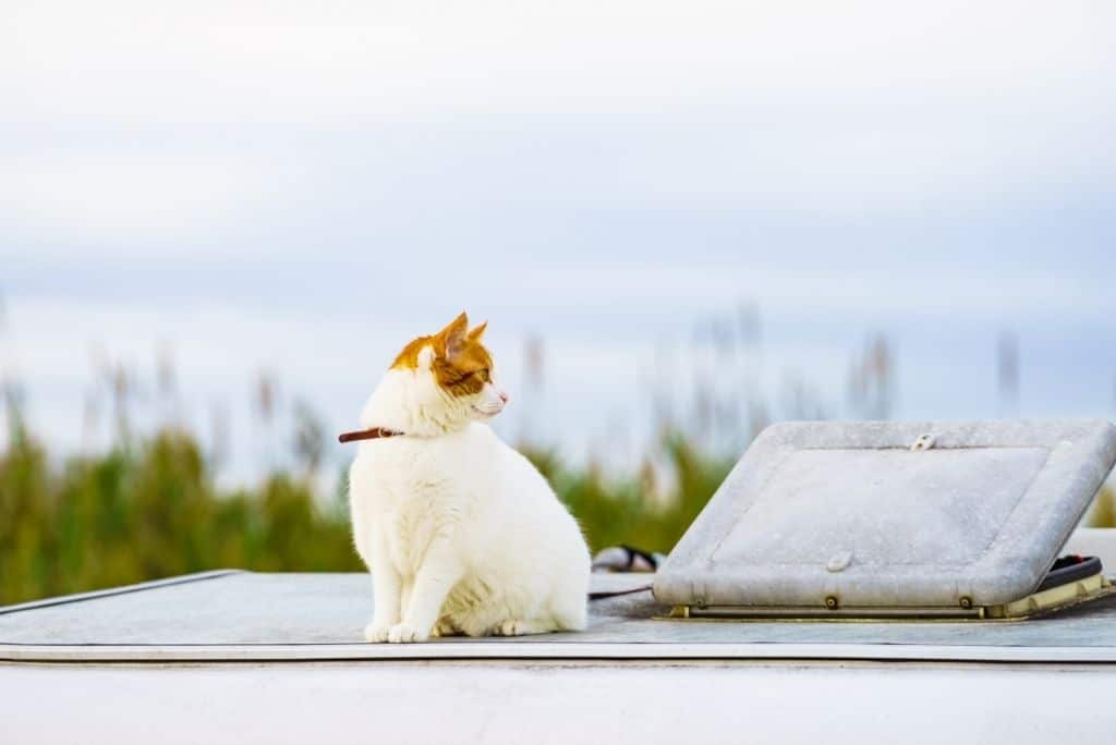 white cat sitting on roof of rv