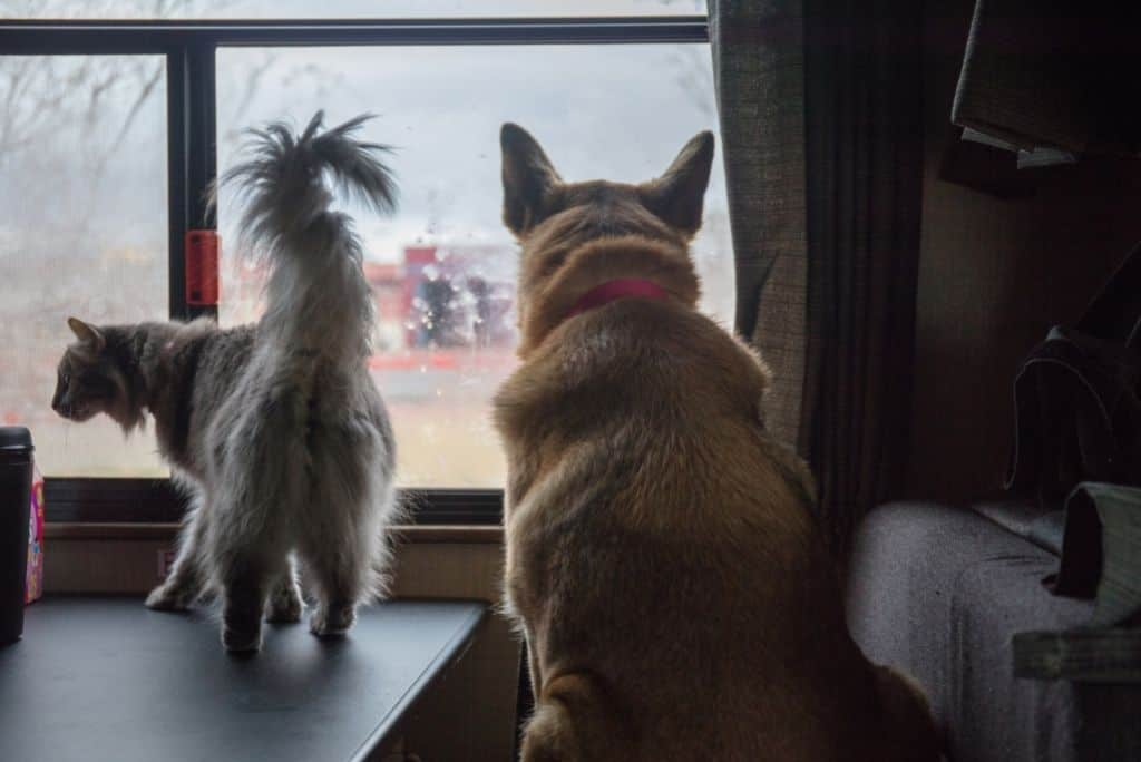 dog and cat traveling in an rv