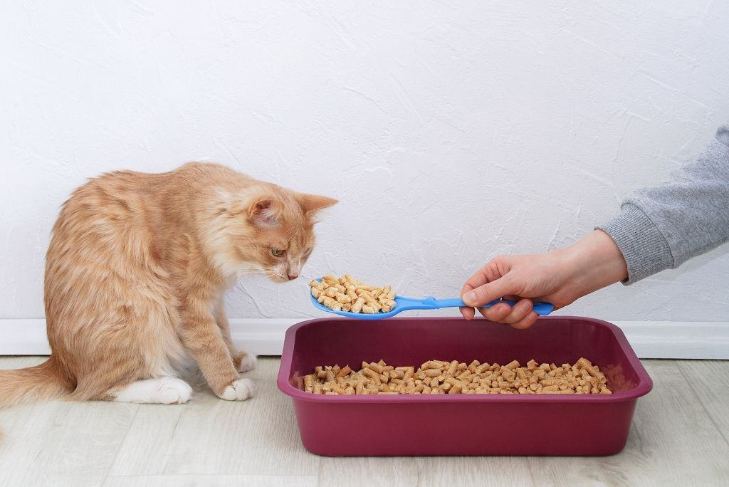 cat sniffing eco-friendly litter pellets from red litter box