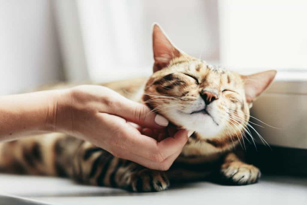 woman scratching cat under chin
