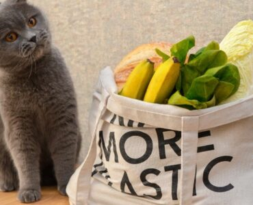 gray cat beside plastic free grocery bag