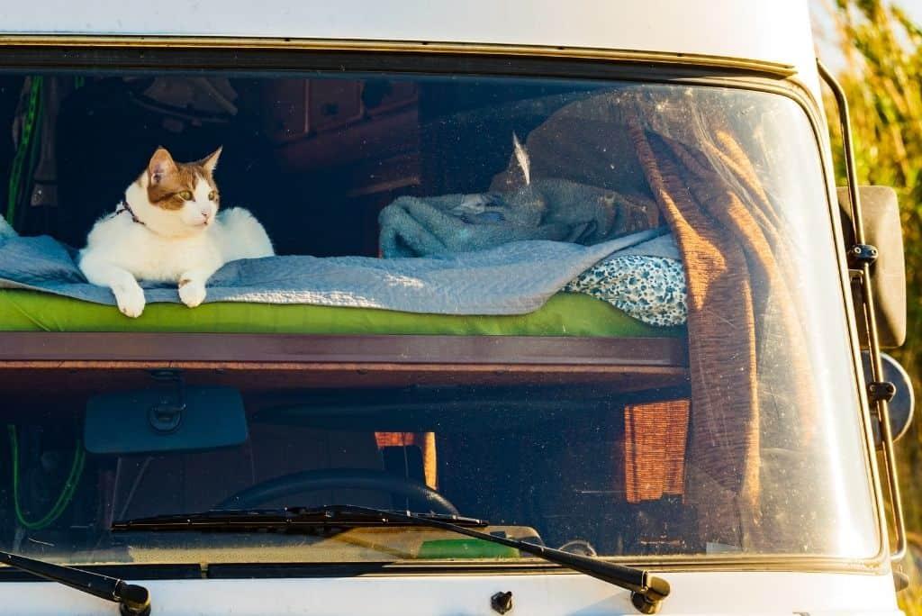 cat traveling in rv